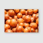 Yellow Onions Close Big Golden On Poster, Pillow Case, Tumbler, Sticker, Ornament