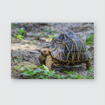 Yellow Shelled Turtle Walking Kinosternidae On Poster, Pillow Case, Tumbler, Sticker, Ornament