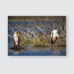 Yellowbilled Stork Lake Naivasha Poster, Pillow Case, Tumbler, Sticker, Ornament