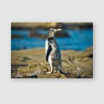 Yelloweyed Penguin Megadyptes Antipodes Hoiho Rarest Poster, Pillow Case, Tumbler, Sticker, Ornament