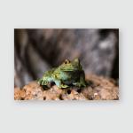 Stone Garden Frog Meditating Poster, Pillow Case, Tumbler, Sticker, Ornament