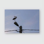 Stork On Top Electricity Pole Rural Poster, Pillow Case, Tumbler, Sticker, Ornament