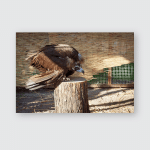 Young Black Vulture Sit On Wooden Poster, Pillow Case, Tumbler, Sticker, Ornament
