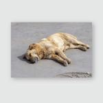 Stray Dog Sleeping On Asphalt Spring Poster, Pillow Case, Tumbler, Sticker, Ornament