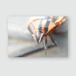 Striped Beetle Portrait Macro Blurred Background Poster, Pillow Case, Tumbler, Sticker, Ornament