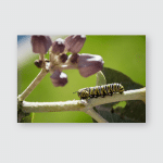 Striped Caterpillar Feeding On Plant Poster, Pillow Case, Tumbler, Sticker, Ornament