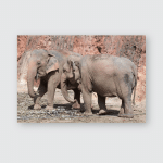 Young Elephants Eating Sugar Cane Poster, Pillow Case, Tumbler, Sticker, Ornament