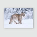 Young Eurasian Lynx On Snow Amazing Poster, Pillow Case, Tumbler, Sticker, Ornament