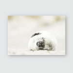 Young Harbor Seal Natural Environment Phoca Poster, Pillow Case, Tumbler, Sticker, Ornament