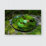 Young Leaves On Mossy Plate Japanese Poster, Pillow Case, Tumbler, Sticker, Ornament