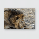 Young Lion Close Look Lions Face Poster, Pillow Case, Tumbler, Sticker, Ornament