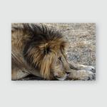 Young Lion Close Look Lions Face Poster, Pillow Case, Tumbler, Sticker, Ornament
