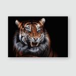 Sumatran Tiger Panthera Tigris Sumatrae Beautiful Poster, Pillow Case, Tumbler, Sticker, Ornament