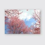 Sukara Wild Himalayan Cherry Blossom Full Poster, Pillow Case, Tumbler, Sticker, Ornament
