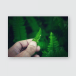 Young Man Holds Leaf Fern Hand Poster, Pillow Case, Tumbler, Sticker, Ornament