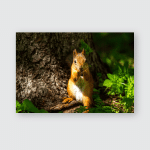 Summer Forest Rodent Squirrel Red Hair Poster, Pillow Case, Tumbler, Sticker, Ornament