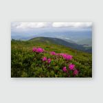 Summer Landscape Blooming Rhododendron Carpathians Mountains Poster, Pillow Case, Tumbler, Sticker, Ornament