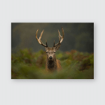 Young Red Deer Stag Poster, Pillow Case, Tumbler, Sticker, Ornament