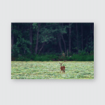 Young Roe Deer Fresh Mowed Meadow Poster, Pillow Case, Tumbler, Sticker, Ornament