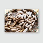 Sun Dried Banana On Threshing Basket Poster, Pillow Case, Tumbler, Sticker, Ornament