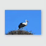Young Stork Against Blue Skyzahliniceczech Republik Poster, Pillow Case, Tumbler, Sticker, Ornament