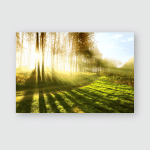 Sunny Forest Early Morning Poster, Pillow Case, Tumbler, Sticker, Ornament