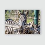 Zebra Standing Behind Wooden Fence Poster, Pillow Case, Tumbler, Sticker, Ornament