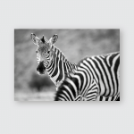 Zerba Kenya Safari Black White Poster, Pillow Case, Tumbler, Sticker, Ornament