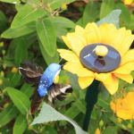 Solar Dancing Hummingbird With Sunflower - Mothers Day Gift