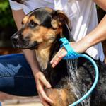 Portable Dog Shower