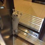Retractable Dog Gate ? Indoor Pet Barrier