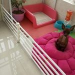 Retractable Baby And Pet Safety Gate