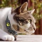 Cat Gps Tracker Locator Device For Pets