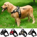 Adjustable Padded Nylon Dog Collar