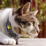 Cat Gps Locator Device For Pets
