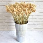 30Pcs Natural Dried Flowers Rabbit Tail Grass Bunch Colorful Lagurus Ovatus Real Flower Bouquet for Home Wedding Decoration