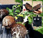 Cajas para plantas al aire (10 unidades)