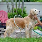 360 Degree Dog Shower Tool