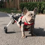 PawRoll™ Dog Wheelchair