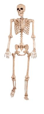 Crazy Bonez Pose-N-Stay Skeleton(5 ft & 12 ft)