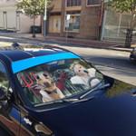 Gearhumans 3D Halloween Labrador Retriever Custom Car Auto Sunshade