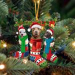 Pitbull Christmas Socks Ornament