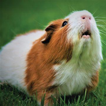 Hamster supplies
