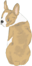 Boston terrier brown
