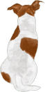 Jack russell 3
