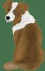 Australian shepherd5