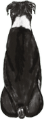 Boxer Black