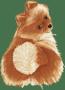 Pomeranian Brown