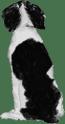 Brittany spaniel 2