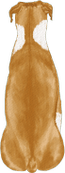 Boxer Brown